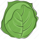 cabbage, diet, food, healthy diet, nutrition, vegetable icon