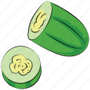cucumber, cucumis sativus, food, healthy diet, squash plant, vegetable icon