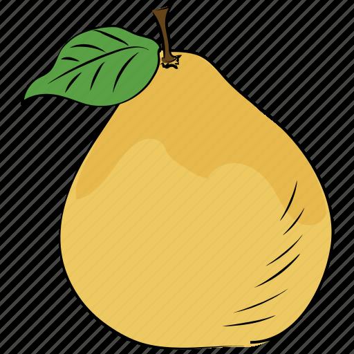 alligator pear, avocado, avocado pear, fruit, pear, tropical fruit icon