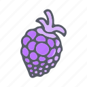 berries, blackberry, eat, food, fruit icon
