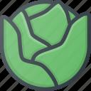 cabbage, food, health, healthy, vegetable