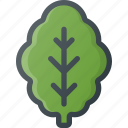 food, health, healthy, lettuce, lief, salad, vegetable icon