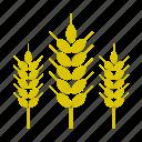 food, nature, vegetable, wheat