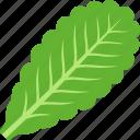 green, leaf, lettuce, vegan, vegetable, vegetarian icon