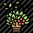 bouquet, decoration, flower, plant, vase