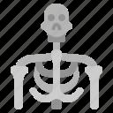 death, grim, mexican, reaper, skeleton