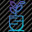 flowerpot, natural, nature, plant