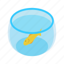 isometric, gold, fish, yellow, water, aquarium, orange