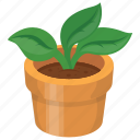 indoor plant, leaves, nature, plant, pot icon