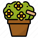 decorative, flowers, garden, ornamental, plant, pot