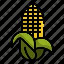 cob, corn, farm, food, maize, natural