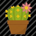 cactus, decorative, flowers, garden, ornamental, plant, pot