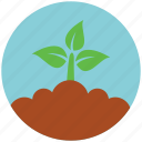 garden, plant, crop, ecology, environment, green, nature