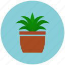 garden, growing, growth, plant pot, crop, plant
