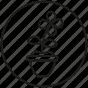 blossom, circle, floret, flower, flowerpot, garden, petals icon