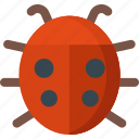 animal, beetle, bug, garden, insect, ladybug icon