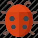 ladybug, animal, beetle, bug, garden, insect