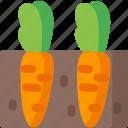 carrots, ecology, green, organic, plant, vegetable, vegetables