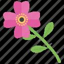 beauty, dog rose, flower, garden flower, nature icon