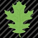 lettuce leaf, oak, oak leaf, palm leaf, plant icon