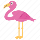 african bird, animal, bird, flamingo, wading bird