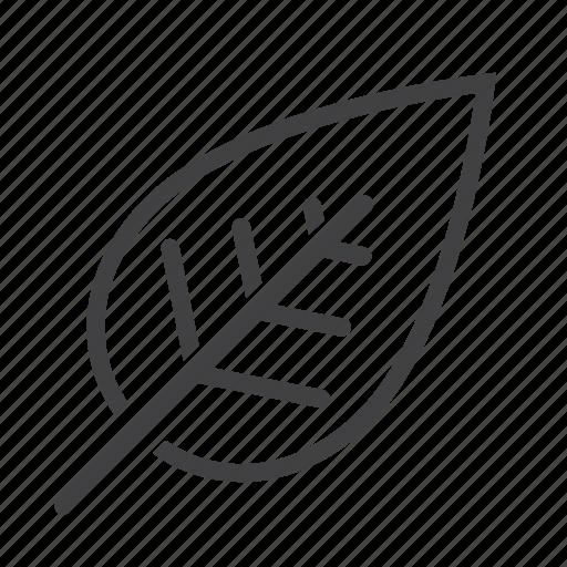 Eco, leaf, nature icon - Download on Iconfinder