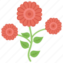 decorative flowers, floral, flowers, nature, rose icon