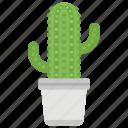 cactus, decoration, indoor plant, plant, succulent, wild plant
