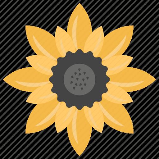 Beauty, flower, garden flower, nature, sunflower icon - Download on Iconfinder