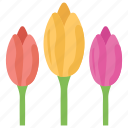 beauty, flower, garden flower, nature, tulips icon