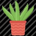 aloe vera, cactus, organic plant, plant, succulent icon
