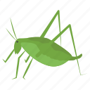 caelifera, flying insect, grasshopper, herbivorous insect, insect