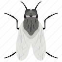 fly, fruit fly, house fly, insect, mosquito icon