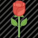 decorative flowers, floral, flower, nature, rose