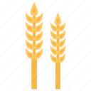 flour, food, gram, maize, wheat icon