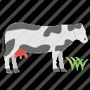 animal, buffalo, cattle, cow, herbivorous, ox