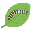 animal, caterpillar, insect, larva, plant caterpillar icon