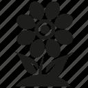 flower, growth, leaf, plant
