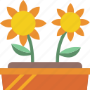 plant, flower, gardening, garden, bed, grow