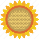 garden, gardening, grow, plant, sunflower icon