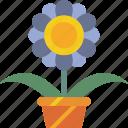 flower, garden, gardening, grow, plant