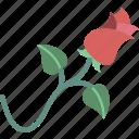 garden, gardening, grow, plant, rose