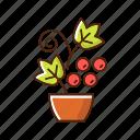 farming plant, ripe, berry, grape