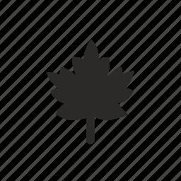 canada, leaf, nature icon