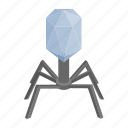 animal, bacteria, cell, isometric, legs, spider, virus icon