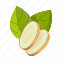 ginger, herbaceous, plant, root, sheet, spice, tropical icon