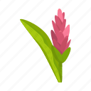 flower, ginger, herbaceous, leaf, plant, spice, tropical