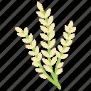 barley, grain, healthy diet, healthy food, human food icon