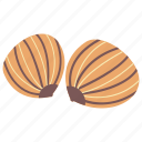 dried fruit, healthy food, nutrients, sweet chestnut, winter fruit icon