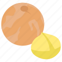 chestnut, dried fruit, healthy food, nutrients, winter fruit icon
